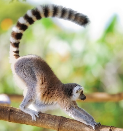 Effective long tails - for lemurs and keyword advertising