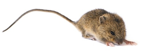 Long tailed mouse - weak long tail keywords
